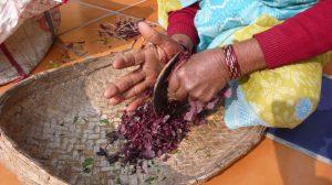 préparation de l'amarante pour le repas, Choti