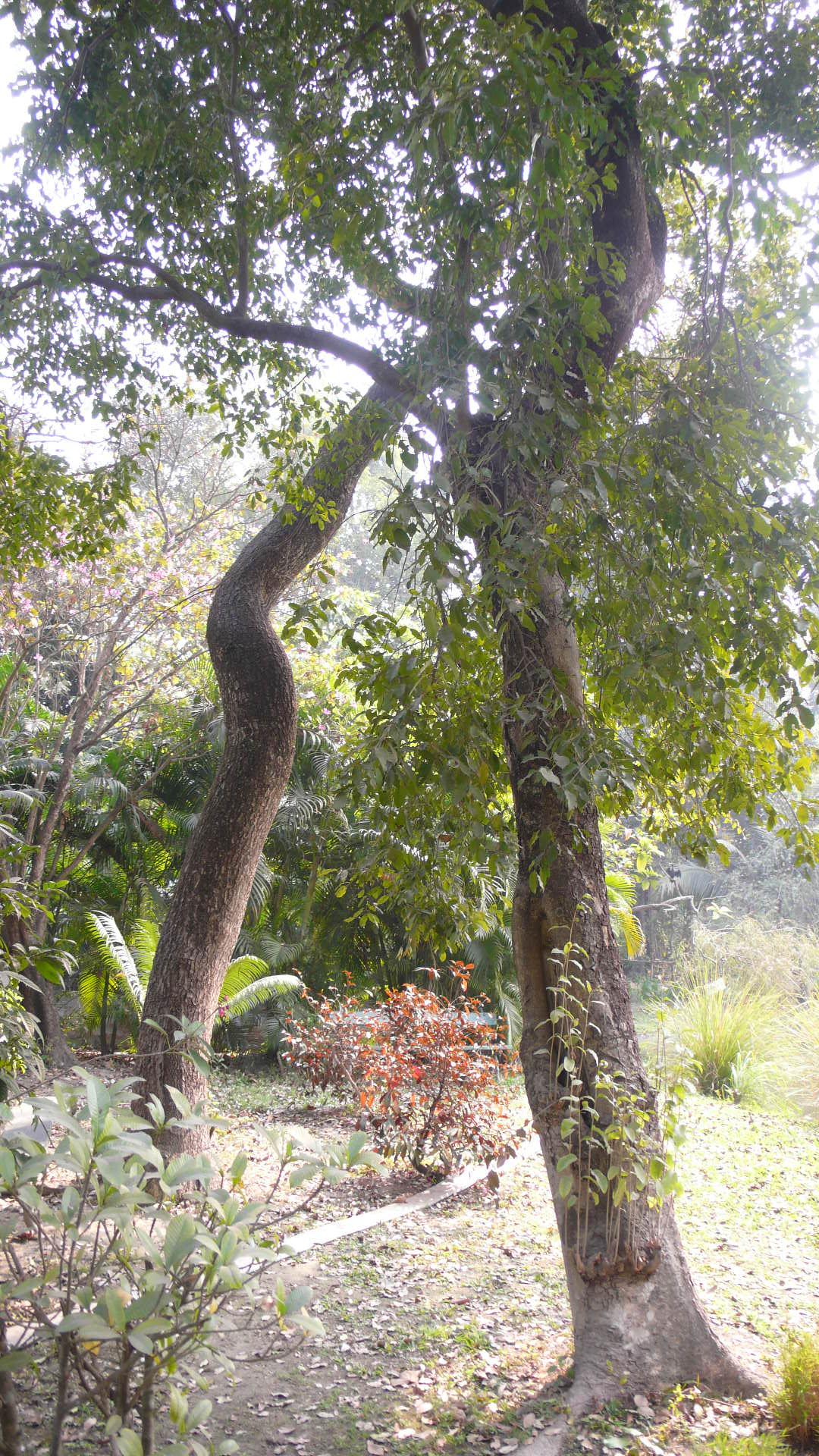Jardin botanique isabelle roux c ramiste artiste for Jardin botanique decembre 2015