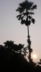 Coucher de soleil dans une rue de Kolkata