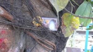 Détail arbre sacré