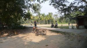 La campagne dans le delta du Gange