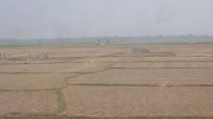 Dans le train, plantation du riz d'été, février 2015