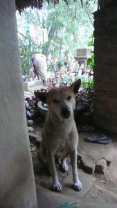 Le chien dans la maison de mes hôtes
