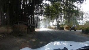 Sur la route de l'himalaya, bordée de banian trees