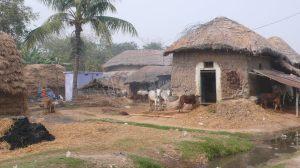 Le village, les fermes et les bêtes