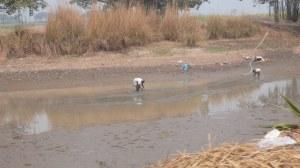 Nettoyage du plan d'eau